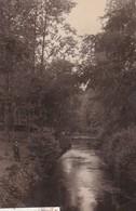 BELLE ISLE EN TERRE  - Dépt 22 - Sous-bois Au Barrage Des Papeteries Vallée - Autres Communes