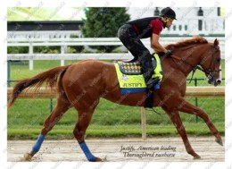 Ukraine | Postcard | Justify | Leading Thoroughbred Racehorse | Horse - Chevaux