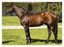 Ukraine | Postcard | Mastery | Leading Thoroughbred Racehorse | Horse - Chevaux