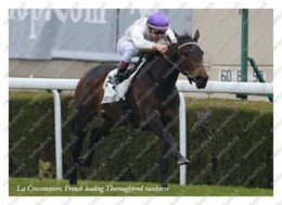Ukraine | Postcard | La Cressonniere | Leading Thoroughbred Racehorse | Horse - Chevaux