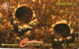 TELECARTE  DOMINIQUE  EC$10  Hydroids - Dominique