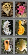 Brazil 2019: Mushrooms - 6 Stamps With Fungi Images. Plants, Flowers, Nature. MNH - Funghi