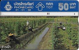 CARTE THAILANDE HOLOGRAPHIQUE-50Bath-1995-PLANTATION-Utilisé-TBE - Thaïlande