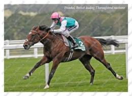 Ukraine | Postcard | Frankel | Leading Thoroughbred Racehorse | Horse - Chevaux