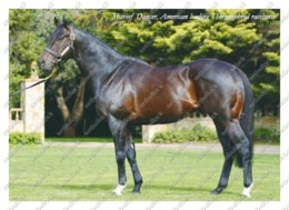 Ukraine | Postcard | Shareef Dancer | Leading Thoroughbred Racehorse | Horse - Chevaux