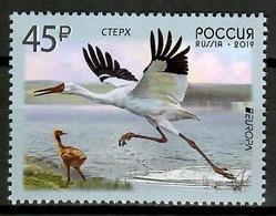 Russia 2019 Rusia / Birds Europa CEPT MNH Vögel Aves Oiseaux / Cu13119  41-5 - Pájaros