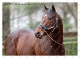 Ukraine   Postcard   Army Mule   Leading Thoroughbred Racehorse   Horse - Cavalli