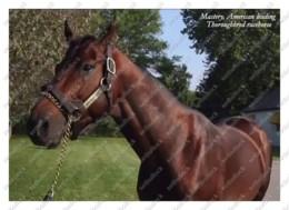 Ukraine   Postcard   Mastery   Leading Thoroughbred Racehorse   Horse - Cavalli