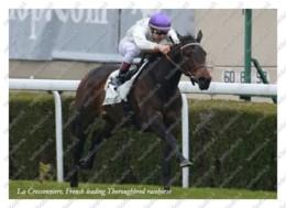 Ukraine   Postcard   La Cressonniere   Leading Thoroughbred Racehorse   Horse - Cavalli
