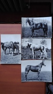 Cavalli Lotto Di 4 - Horses