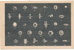 BESANCON - Fabrique D'Horlogerie J.F. Laviolette, Modèles De Bagues - Besancon