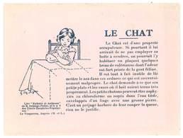 Papier Style Buvard : Le Chat  ( Le Vaugareau, Angers ) - Tiere