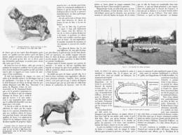 LES CHIENS De BERGER  1900 - Animaux