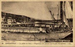 CPA 29 CONCARNEAU LA PECHE AU THON DISPOSITION DU POISSON SUR LE PONT DU BATEAU - Pesca