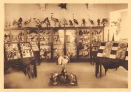Namur - Musée Forestier - Pavillon Des Papillons, Insectes Et Oiseaux - Namur