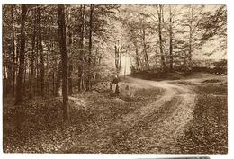 La Neuville-au-Bois - Pittoresque - Circulée En 1943 -  2 Scans - Tenneville