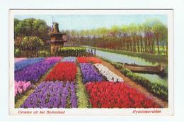NEDERLAND:  GROETEN  UIT  HET  BOLLENLAND  -  HYACINTENVELDEN  -  KLEINFORMAT - Fiori