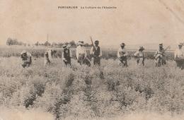 Pontarlier,la Culture De L Absinthe - Pontarlier