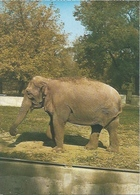 Postcard RA010372 - Elephant ZOO Osijek Croatia - Elephants