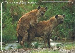 Postcard RA010433 - Hyena (Hyaena) - Animaux & Faune