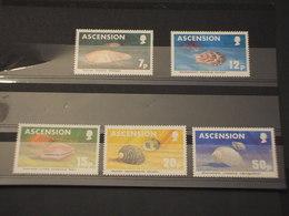 ASCENSION - 1983 CONCHIGLIE 5 VALORI - NUOVI(++) - Ascensione