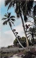 AFRIQUE NOIRE - GUINEE FRANCAISE : Cocotiers Tree Coconut Palm De Coco - CPSM Dentelée Format CPA 1956 - Black Africa - Guinée Française