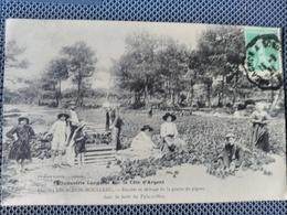 Arcachon - Moulleau. Récolte Et Séchage De La Graine De Pignes Dans La Forêt Du Pyla Sur Mer. Rare. - Arcachon