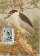 Cuba Carte Maximum 1965 Héron 924 - Maximumkarten