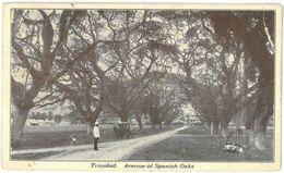 CPA TRINIDAD - Avenue Of Spanish Oaks - Année 1927 - Trinidad
