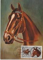 Niger Carte Maximum 1973 Chevaux 283 - Niger (1960-...)