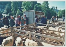 CPM 48 MARVEJOLS ... Sur L'esplanade, Le Marché Aux Moutons Des Causses. Juillet 1999 (Livenais CO/01) - Marvejols