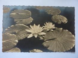 "Cartolina Viaggiata  ""I FIORI DEL LAGO NINFEE"" 1947 - Flowers"