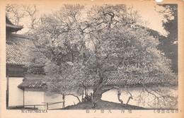 Cartolina Japan Matsushima View - Cartoline
