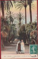 Algerie Algeria Alger Jardin D' Essai L' Allee Des Yuccas - Algérie