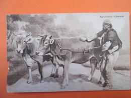 Agricoltore Albanese - Albania