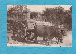 Le Limousin Illustré. - Nos Campagnes. - Attelage Limousin. - Frankreich