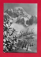CARTOLINA NV ITALIA - Saluti Dalle Alpi - Stelle Alpine - 10 X 15 - Saluti Da.../ Gruss Aus...