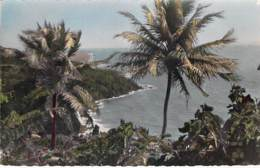 COCOTIERS Tree Coconut Palm De Coco - GUADELOUPE : Trois Rivières - CPSM PF - Palm Trees Palmen Palme Palmeras Palmbomen - Bäume