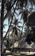 COCOTIERS Tree Coconut Palm De Coco - AFRIQUE NOIRE Black Africa - CPSM PF # 1013 - Palm Trees Palmen Palme Palmbomen - Bäume