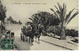 83 Toulon N°1174 Le Mourillon Boulevard Du Littoral Bel Attelage Chevaux Gros Plan Poussette Ou Landau 1910 - Toulon