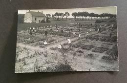 Horticulture Jardinier - Cartes Postales