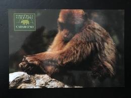 Mono - Affen