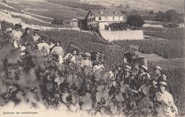 Scènes De Vendanges - Wijnbouw