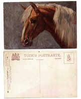 """Österreich, Ca. 1900, Bunte Ungebr. AK (Tucks Postkarte)""""Polnisches Pferd"""" (15501E) - Horses"""