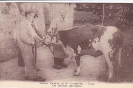 Cpa-37-tours-animée- Institut Vaccinal Du Dr Chaunier-vache, Génisse- - Tours