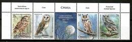 Serbia 2017 / Birds Owls MNH Vögel Aves Oiseaux  / Cu13416  36 - Pájaros