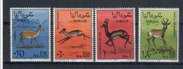 SOMALIA 1967 - FAUNA ANIMALI GAZZELLE  - MNH ** - Somalia (1960-...)