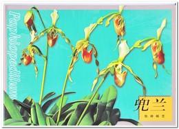 China 2001, Postfris MNH, Flowers, Orchids ( In Folder ) - 1949 - ... Volksrepubliek
