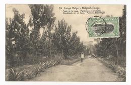 Congo Belge Lowa Plantations De Funtumia Carte Postale Ancienne - Belgian Congo - Other