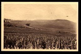 51 - CRAMANT - Vignoble Du Cramant, 1er Cru De Raisins Blancs - Champagne POMMERY à Greno - Reims - France
